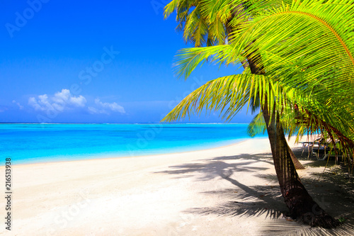 Poster Strand Dream beach with palm trees on white sand and turquoise ocean