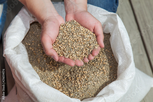 Cuadros en Lienzo  Hand full of chicken feed