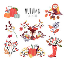 Autumnal Arrangements Collecti...
