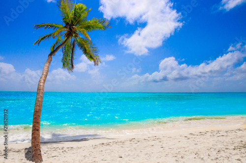 Staande foto Strand Dream beach with palm tree on white sand and turquoise ocean