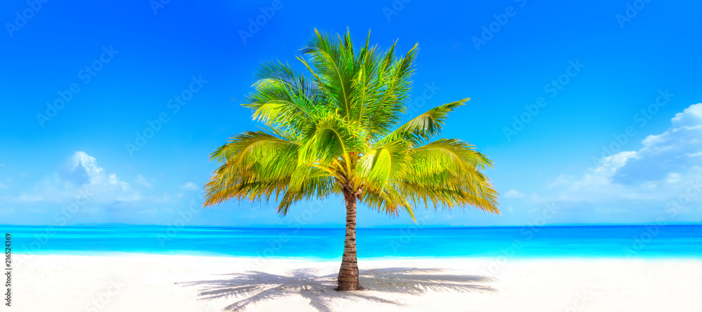 Fototapeta Surreal and wonderful dream beach with palm tree on white sand and turquoise ocean