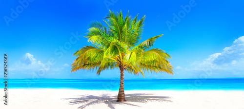 La pose en embrasure Palmier Surreal and wonderful dream beach with palm tree on white sand and turquoise ocean