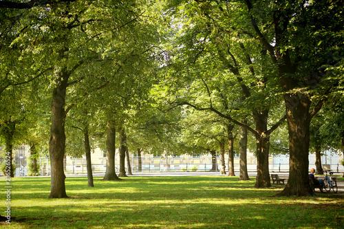 Munich cityscape,  Hofgarten park in center city, summer view, alley framed by t Fototapete