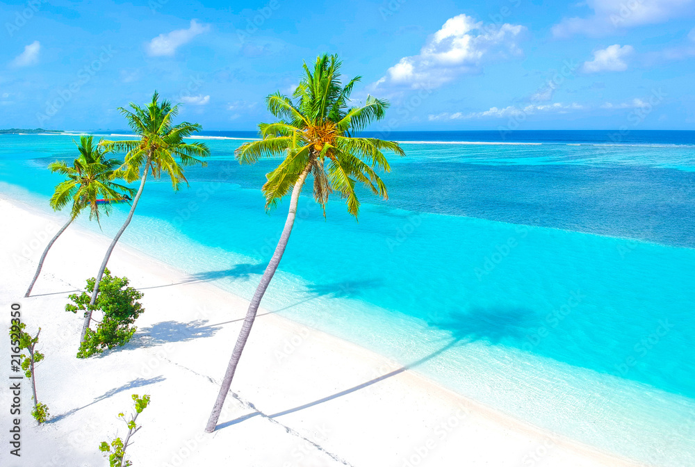 Fototapety, obrazy: Palm trees on the sandy beach and turquoise ocean from above