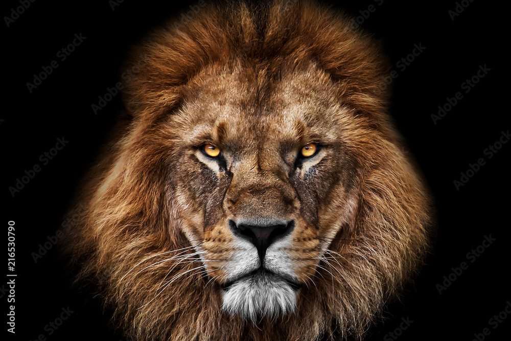Fototapeta Face Lion King