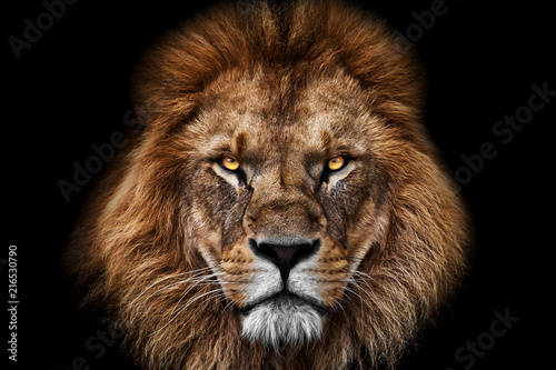 Poster de jardin Lion Face Lion King
