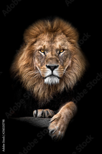 Photo Lion King