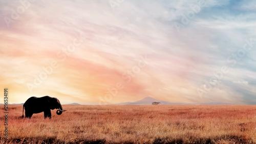 Samotny słoń w sawannie przy zmierzchem. Afrykański wizerunek artystyczny. Park Narodowy Serengeti.