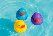 Three Colorful Rubber Ducks, Y...