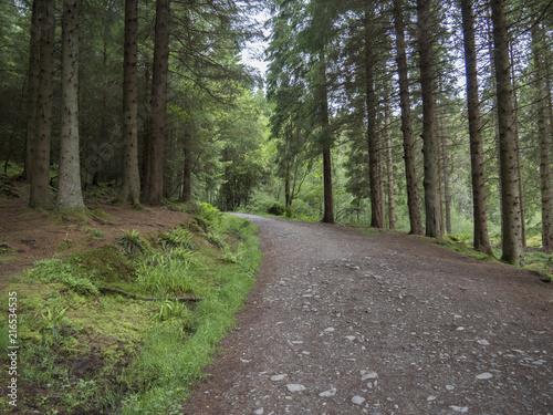 Fotobehang Weg in bos Chemin dans une forêt (Garadhban, Balmaha, West Highland Way, Ecosse)