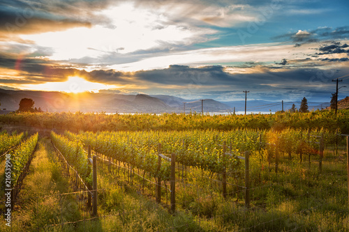 Foto auf AluDibond Weinberg Sunset at Okanagan Lake near Penticton with a vineyard in the foreground, British Columbia, Canada