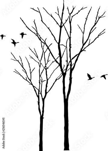 Photo Baum mit Ente Silhouette