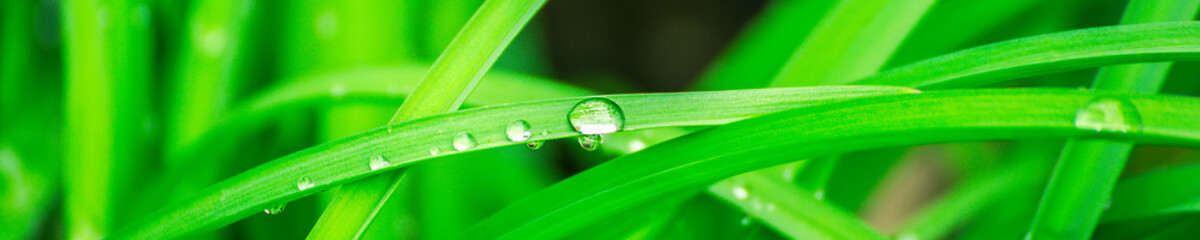 Panel SzklanyGreen background with grass. Water drops on the green grass. Drop of dew in morning on a leaf. Banner, header for web design.