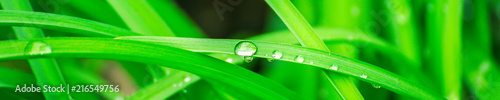 Green background with grass. Water drops on the green grass. Drop of dew in morning on a leaf. Banner, header for web design.