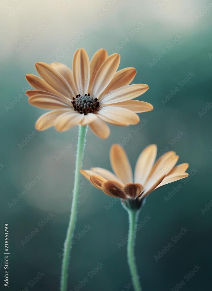 Fototapety, obrazy: Żółte kwiaty