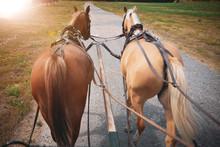 Pferde Vor Der Pferdekutsche