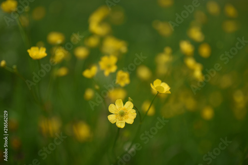 Fiori Di Campo Gialli.Fiori Di Campo Gialli Buy This Stock Photo And Explore Similar