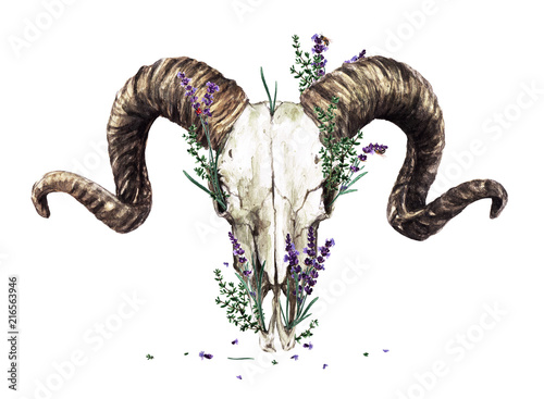 Poster Watercolor Illustrations Animal Skull with Flowers. Watercolor Illustration.