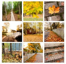 Autumn Collage Showing Differe...
