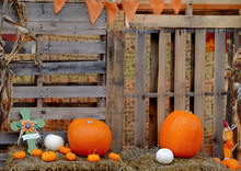 Cute, Rustic Details From A Neighborhood Pumpkin Patch With Warm Tones Added To Enhance The Homey Vibe. Lots Of Wood With Pumpkins And Gourds