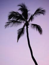Purple Pink Sunset Sky Palm Tree Silhouette