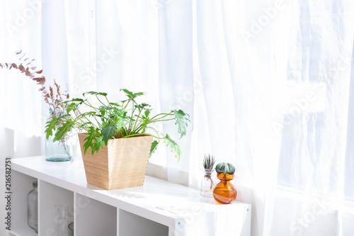 Fotografiet 窓と観葉植物