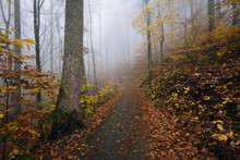 Fog And Fall Color On The Crabtree Falls Trail, In George Washington National Forest Near The Blue Ridge Parkway In Virginia.