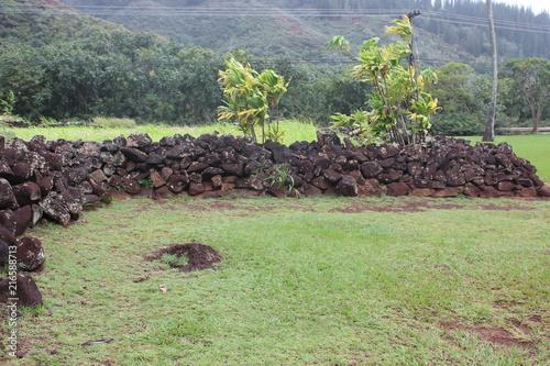 Fotobehang Olijf Kauai