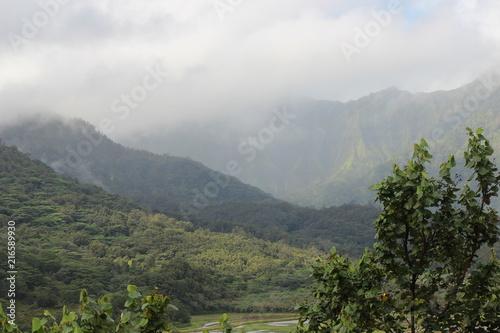 Spoed Foto op Canvas Khaki Kauai