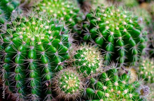 Tuinposter Cactus Close up of Green cactus selective focus