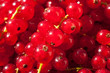 Background of Ripe Red Currant