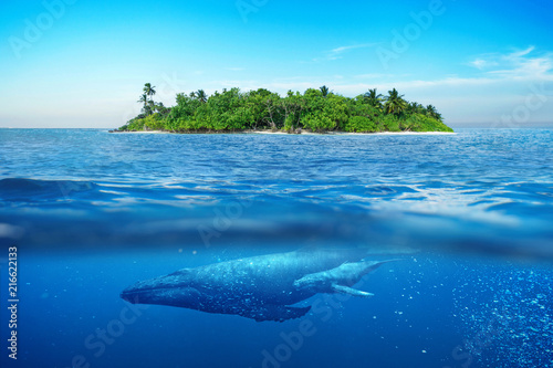 Beautiful island with palm trees. Whale underwater.  Island in the ocean with