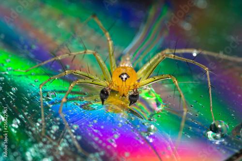 Plakat Makro- pająka Żółty tło Kolorowy