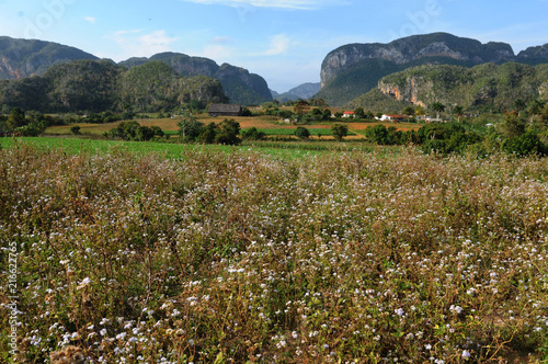 Photo  Cuba: The tabacco plantations in the region Vinales near Pinar del Rio
