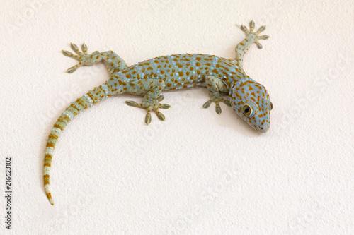 Cuadros en Lienzo Colorful patterns of gecko on plaster wall