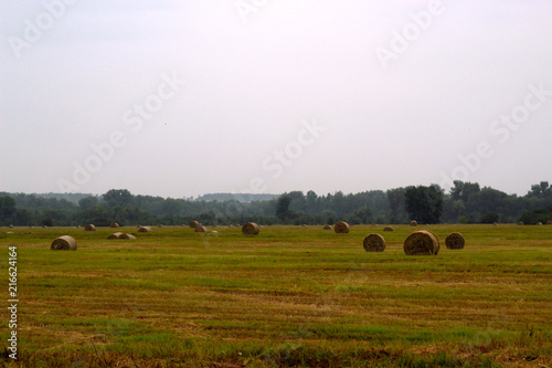 Poster Wit Dry hay in summer in the field