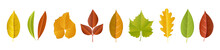 Autumn Leaf Collection With Di...