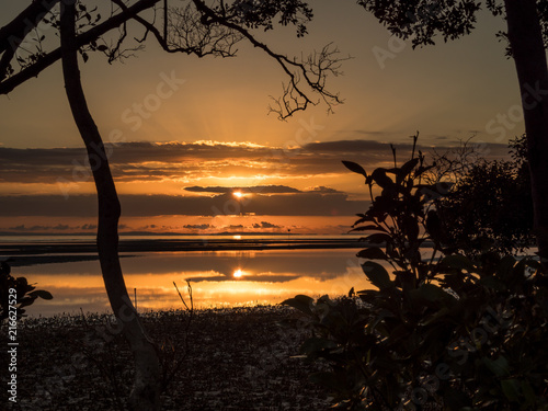 Canvas Prints Autumn Mangrove Sunrise