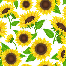 Sunflower Seamless Pattern Wit...