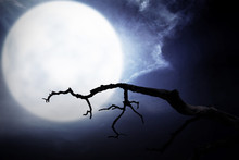 Scary Night Scene With Branch, Full Moon And Dark Clouds