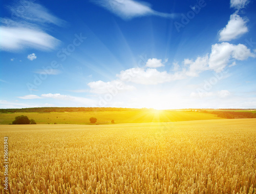 Wheat field and sun