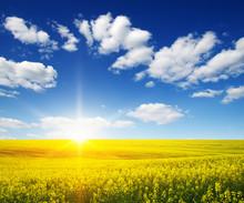 Golden Field On Sky