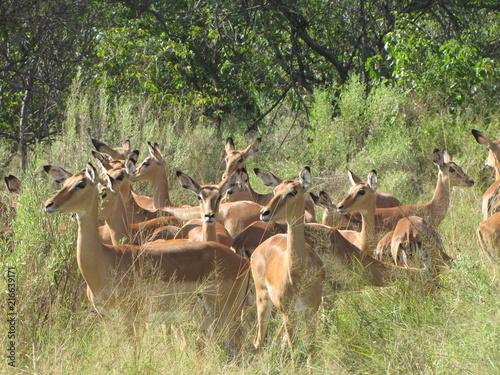 Foto op Plexiglas Antilope BOTSWANA
