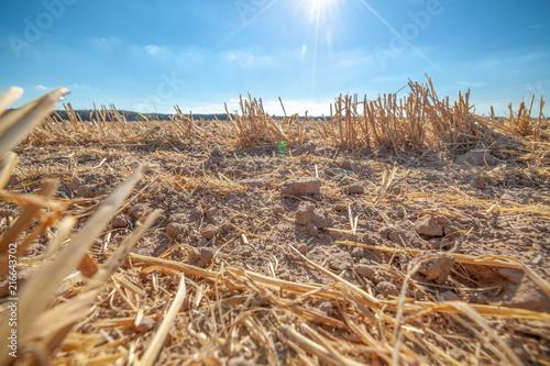 Getreide Feld Trockenheit Erde Dürre Symbolbild Canvas Print