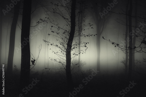 Ingelijste posters Bomen dark mysterious woods with tree in fog at night