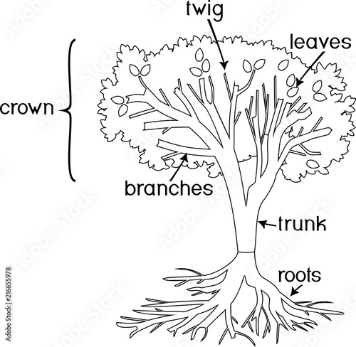 parts of a plant coloring pages | Coloring page. Parts of plant. Morphology of tree with ...
