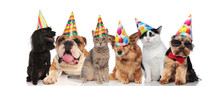 Six Adorable Pets With Colorful Birthday Hats