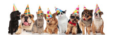 Adorable Team Of Birthday Pets Of Different Breeds