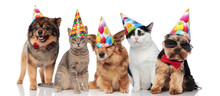 Five Cute Party Pets With Colorful Caps