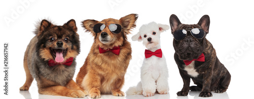 lovely team of four elegant dogs with red bowties © Viorel Sima